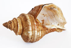 Inversed shell Royalty Free Stock Images