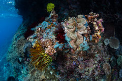 Invertébrés colorés sur le récif en Raja Ampat photo stock