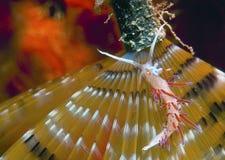 invertebrate royaltyfri foto