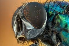 Invertebrate, Fauna, Close Up, Insect Stock Image
