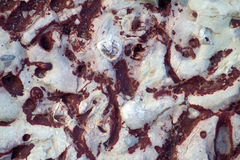 Invertebrate fossils Stock Image