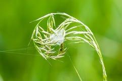 Invertebrate portrait spider lair Stock Photography