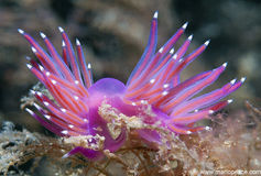 Invertebrate. Small strip invertebrates over the rocks stock photo