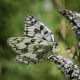 Invertebrates of nature. Precious details of a white butterfly Royalty Free Stock Images