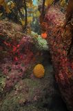 Invertebrates under kelp forest canopy Stock Image