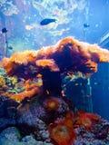 Invertebrati del mare Fotografie Stock Libere da Diritti