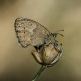 Invertebrati della natura Fotografia Stock Libera da Diritti