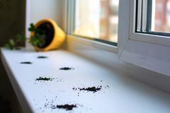 Inverted flower pot and cat tracks on the windowsill. royalty free stock photos
