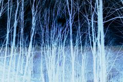 Free Inverted Illustration Of Tree Trunks On Dark Background Stock Photo - 160029910