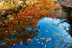 The inverted image of autumn trees and fallen leaves Stock Photos