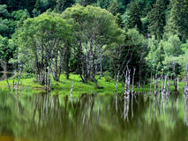 Inverted reflection in water. Xianggelila Stock Images