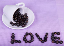 Inverted white cup with black currants Stock Images