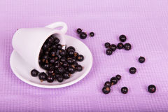 Inverted white cup with black currants Royalty Free Stock Images