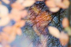 inverterad bild Royaltyfria Foton