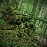 Inverterade gamla stubben för jord högen av en bisarr form är mycket liknande till en spöke, monstret, elaka trollet, ensemble, o Fotografering för Bildbyråer