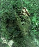 Inverterade gamla stubben för jord högen av en bisarr form är mycket liknande till en spöke, monstret, elaka trollet, ensemble, o Royaltyfri Foto