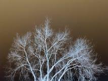Inverterat träd Arkivfoton