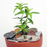 Invest, nurture and grow South African money. Close-up of South African coins in pot with young green plant to represent concept of investing, saving and/or royalty free stock photo
