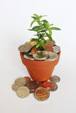 Invest, nurture and grow South African money. South African coins in pot with young green plant to represent concept of investing, saving and/or growing finances royalty free stock photos