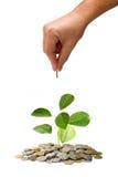 Investa il concetto dei soldi Immagini Stock