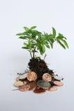 Investeer, voed en kweek Zuidafrikaans geld stock foto's