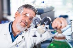 Investigação científica de execução do pesquisador masculino superior em um laboratório Imagem de Stock Royalty Free