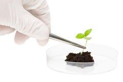 Investigación de la biotecnología foto de archivo