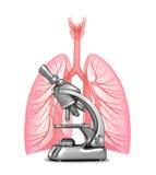 Investigación de pulmones humanos con y de bronquios Foto de archivo