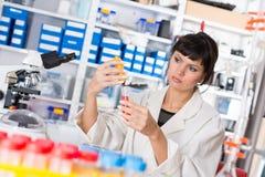 Investigación médica/científica de la mujer joven del estudiante Imagenes de archivo