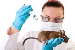 Investigación del animal de laboratorio Fotos de archivo libres de regalías