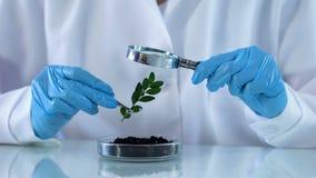 Investigador de la biología que comprueba la planta verde con la lupa, análisis de suelo almacen de metraje de vídeo