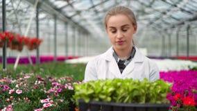 Investigador de sexo femenino sonriente de la biología que camina en caja de la tenencia del invernadero con las plantas que mira almacen de metraje de vídeo