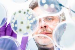 Investigador mayor de las ciencias de la vida que injerta bacterias. Fotos de archivo