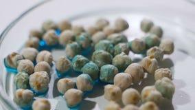 Investigador que analiza granos y las legumbres agr?colas en el laboratorio Investigaci?n de GMO de cereales metrajes
