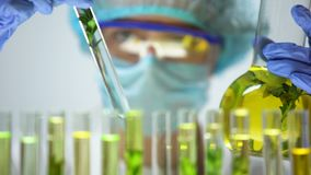 Investigador que compara las plantas en el tubo de ensayo y el frasco, experimento de crianza genético almacen de video
