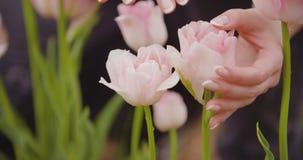 Investigador tulipanes blancos y púrpuras de Examining Stamen Of almacen de metraje de vídeo