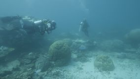 Investigadores subacuáticos para los arrecifes de coral almacen de metraje de vídeo