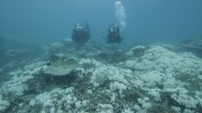 Investigadores subacuáticos para los arrecifes de coral metrajes
