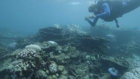Investigadores subacuáticos para los arrecifes de coral almacen de video