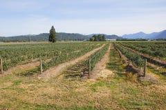 Investimento agricolo Fotografie Stock Libere da Diritti