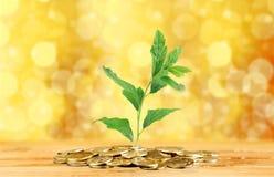 investimentos Fotos de Stock