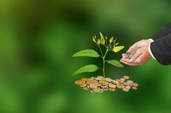 Investing to green business. Man Investing to green business Royalty Free Stock Photography