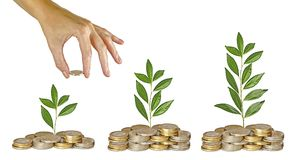 Investing to green business. Woman Investing to green business Royalty Free Stock Image
