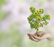 Investing to green business. Woman Investing to green business Royalty Free Stock Photos