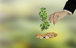 Investing to green business. Woman Investing to green business Stock Photography