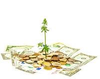 Investissement croissant Images libres de droits