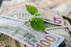 Investissements croissants, Photographie stock libre de droits