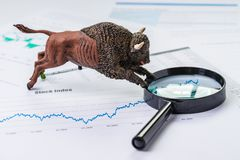 Investment bull stock market concept, bull figure on magnifying glass on chart and graph, price list report paper.  stock photography