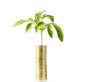 Investment concept, Coins  market Royalty Free Stock Photos
