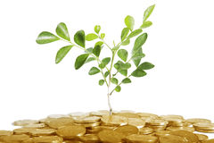 Investment concept with coins and tree Royalty Free Stock Image